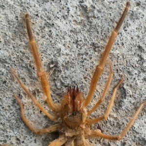 Scorpion au Kms 2208  exécuté ainsi qu'une vipère la veille 28 juillet 2014