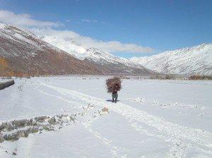 Collecte de bois au début de l'automne dans le corridor du Wakhan