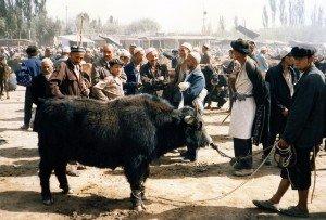Kashgar 03 yak au marché de Kashgar