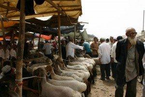 marché au animaux de Kashgar 02