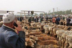 marché au animaux de Kashgar 02 bis un mouton vaut 2000 yans