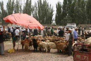 marché au animaux de Kashgar 03