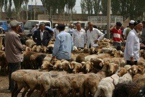 marché au animaux de Kashgar 04