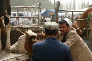 marché au animaux de Kashgar 07