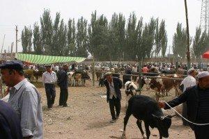 marché aux animaux de Kashgar 08 au marché Grand Bazar du dimanche de Kashgar
