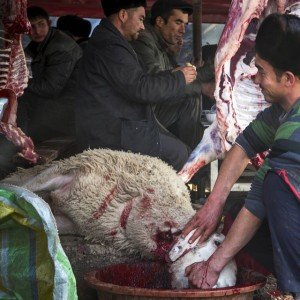 Laurent au Grand marché des animaux du diamnche à Kashgar - mouton à queue grasse égorgé 25 nov 2014