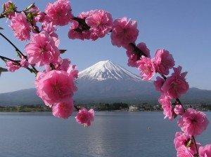 Mont Fuji 08 avec Sakura fleurs de cerisier